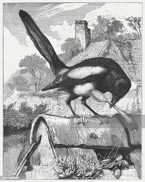 the thieving magpie, wood engraving, published in 1877 - magpie stock illustrations