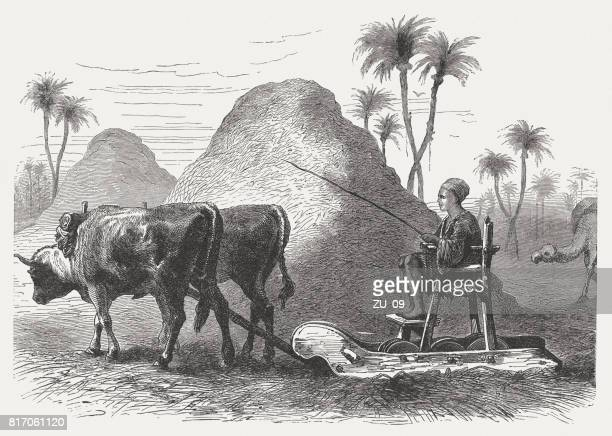 the threshing carriage (deuteronomy 25, 4) , wood engraving, published 1886 - wild cattle stock illustrations, clip art, cartoons, & icons