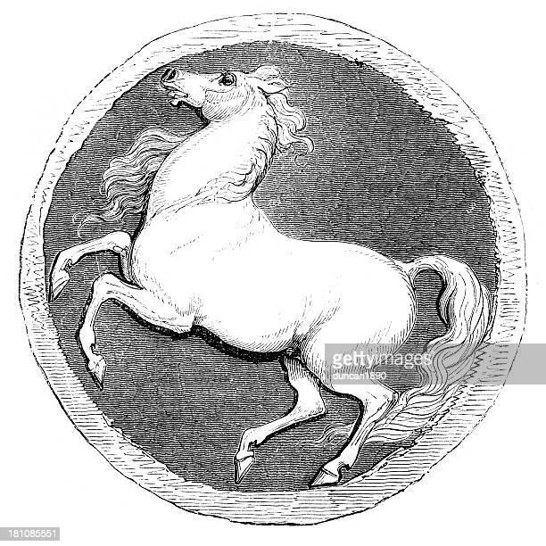 O Cavalo branco