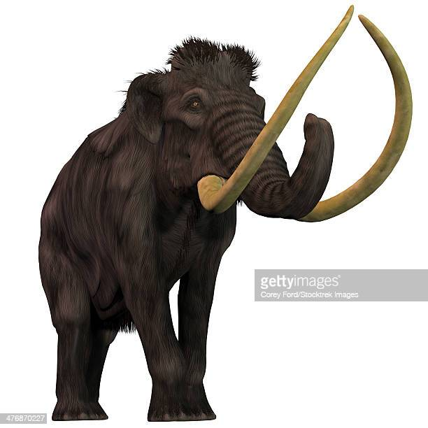 The Woolly Mammoth is an extinct herbivorous mammals that lived from the Pleistocene to the Holocene Periods.