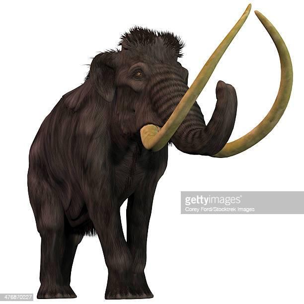 ilustraciones, imágenes clip art, dibujos animados e iconos de stock de the woolly mammoth is an extinct herbivorous mammals that lived from the pleistocene to the holocene periods. - paleobiología