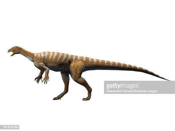 ilustraciones, imágenes clip art, dibujos animados e iconos de stock de thecodontosaurus antiquus, late triassic of the united kingdom. - paleobiología