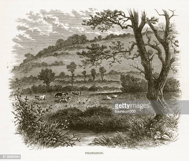 thistledon, england in early 18th century victorian engraving, circa 1840 - sheep stock illustrations, clip art, cartoons, & icons
