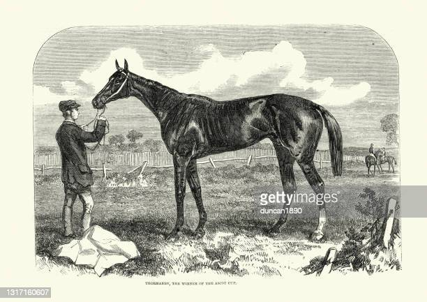 thormanby,  british thoroughbred racehorse and sire, ascot cup winner, 1861 - ascot racecourse england stock illustrations
