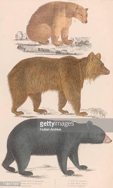 three bears - standing stock illustrations