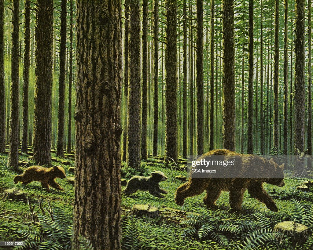 Three Bears in the Woods : stock illustration