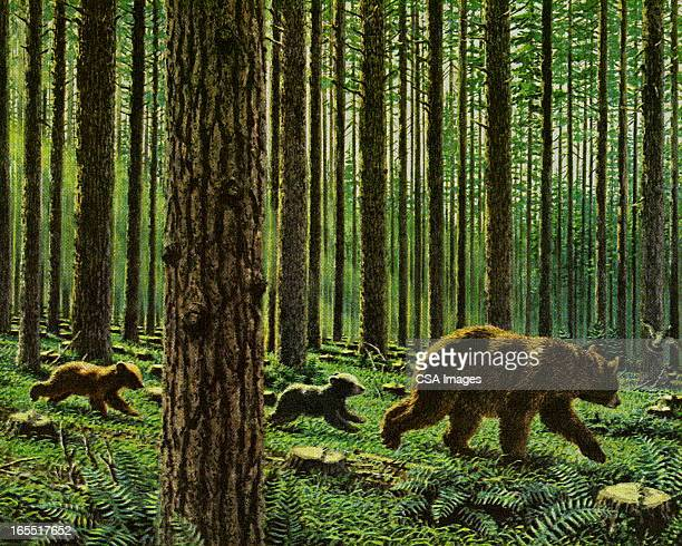 three bears in the woods - tree trunk stock illustrations, clip art, cartoons, & icons