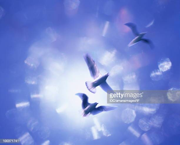Three birds flying in the air, blue background, computer graphic, blurred motion