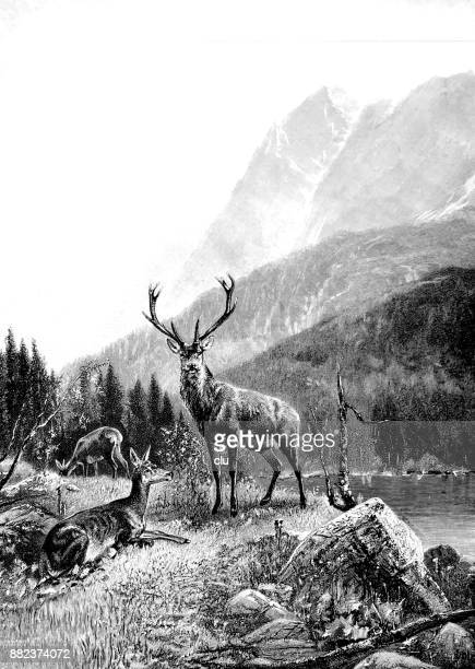 three deer in the forest, close to a river - deer stock illustrations
