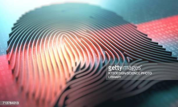 ilustraciones, imágenes clip art, dibujos animados e iconos de stock de three dimensional finger print - huella dactilar