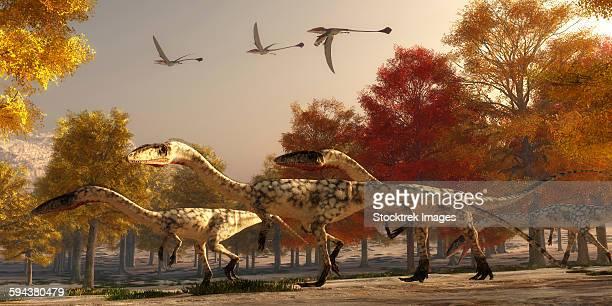 ilustraciones, imágenes clip art, dibujos animados e iconos de stock de three eudimorphodons fly above a group of coelophysis in an autumn forest. - paleobiología