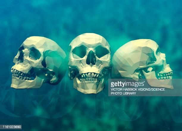 three human skulls, illustration - victor habbick stock illustrations