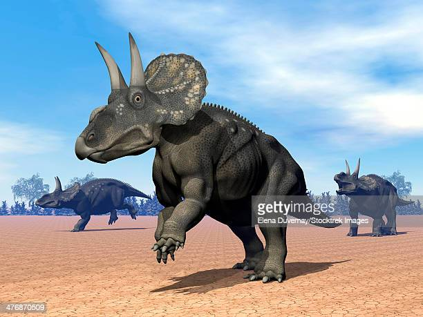 Three Nedoceratops in the desert by daylight.