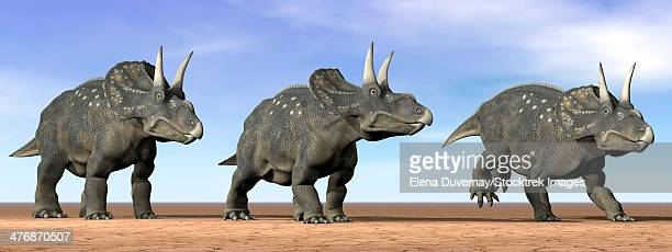 Three Nedoceratops standing in the desert by daylight.
