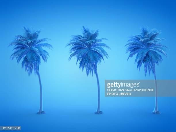three palm trees, illustration - pacific islands stock illustrations