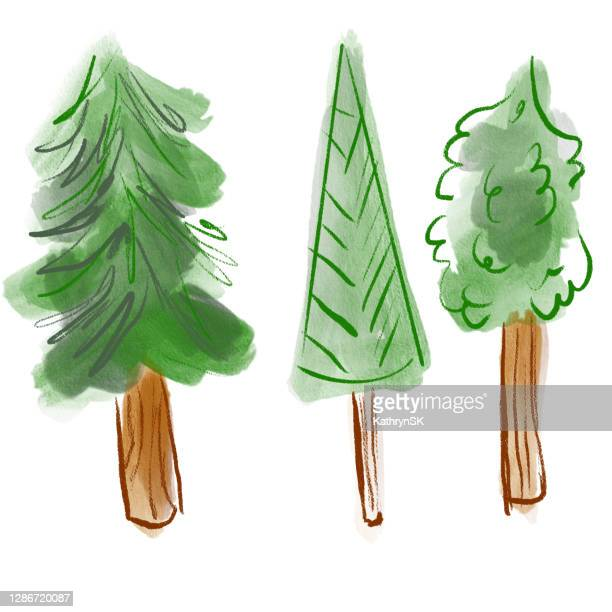 three pine trees drawing - kathrynsk stock illustrations