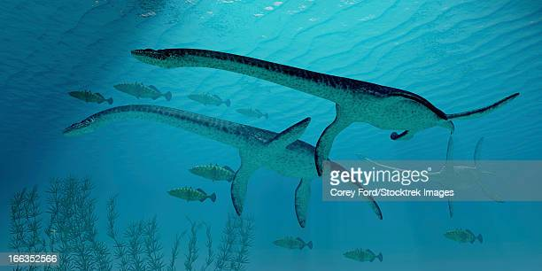 ilustraciones, imágenes clip art, dibujos animados e iconos de stock de three plesiosaurus dinosaurs migrate along with a school of fish to warmer jurassic seas. - monstruo del lago ness