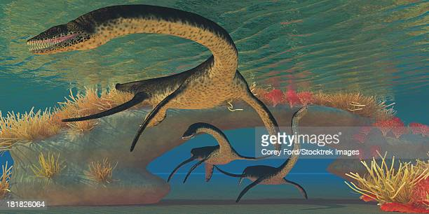 ilustraciones, imágenes clip art, dibujos animados e iconos de stock de three plesiosaurus dinosaurs swim near a natural coral reef bridge in shallow seas. - monstruo del lago ness