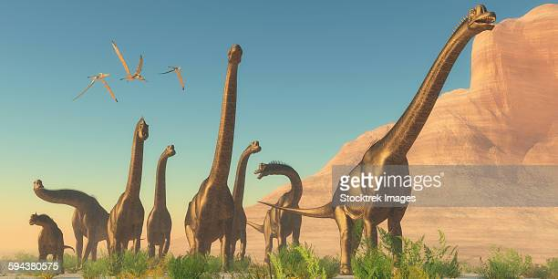 Three Pteranodon flying reptiles watch as a herd of Brachiosaurus dinosaurs travel near a canyon mountain.
