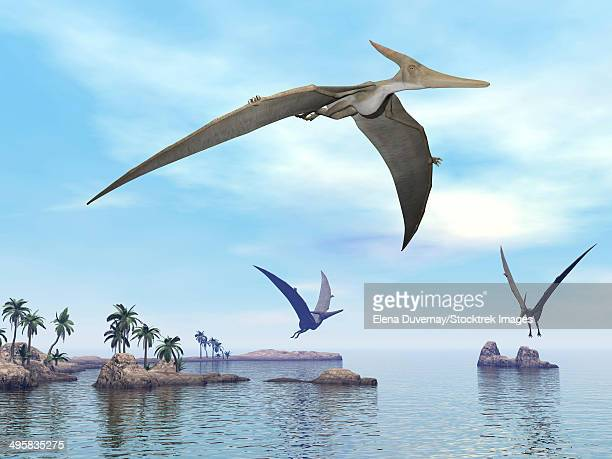 three pteranodons flying over landscape with hills, palm trees and water. - paleozoology stock illustrations