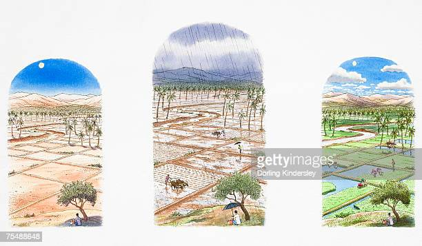 three views of the same rice field in different weather conditions, during a draught, monsoon and after the rain - monsoon stock illustrations, clip art, cartoons, & icons
