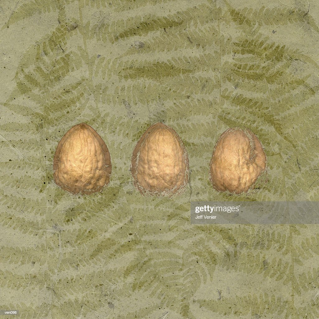 Three Walnuts on Fern Background : Stock Illustration
