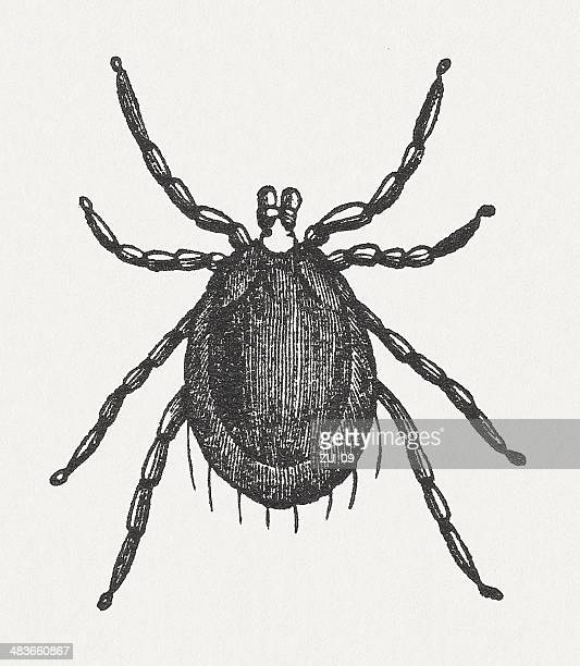 tick (ixodes ricinus), wood engraving, published in 1865 - sick stock illustrations, clip art, cartoons, & icons