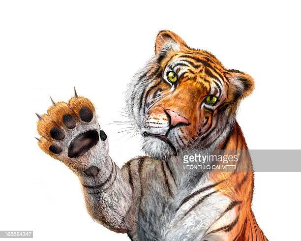 tiger, artwork - front view stock illustrations
