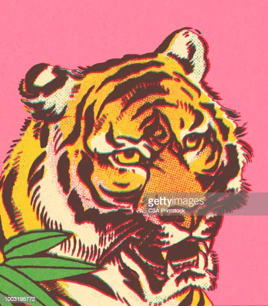 tiger - one animal stock illustrations