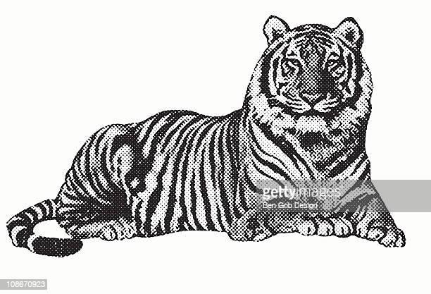 illustrazioni stock, clip art, cartoni animati e icone di tendenza di tiger - rivolto verso l'obiettivo