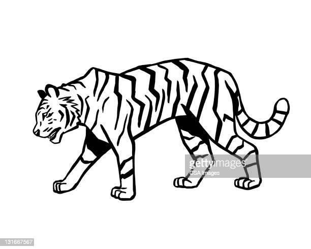 tiger - image stock illustrations
