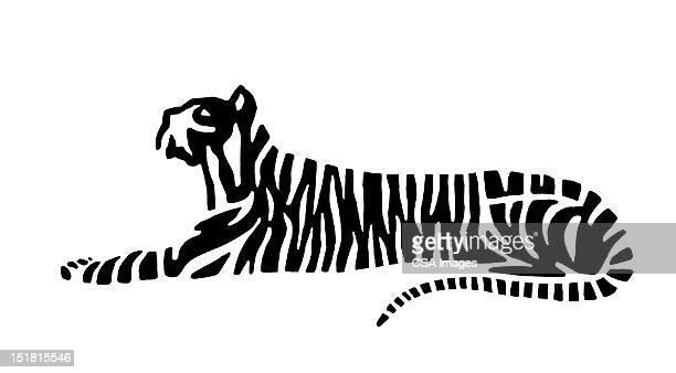 tiger - tail stock illustrations