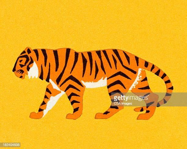 ilustraciones, imágenes clip art, dibujos animados e iconos de stock de tiger - tigre
