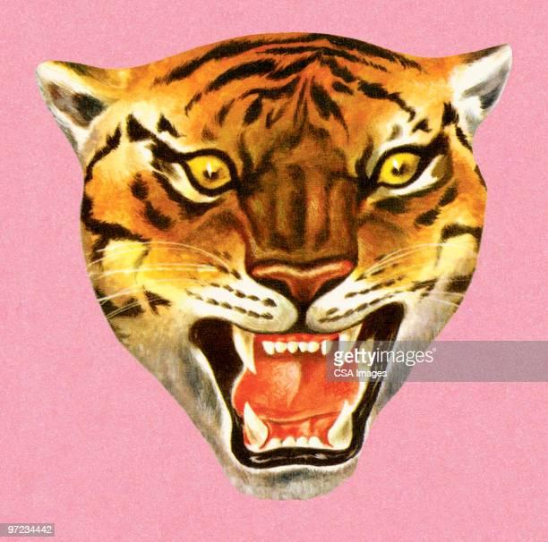 tiger - 1990 1999 stock illustrations