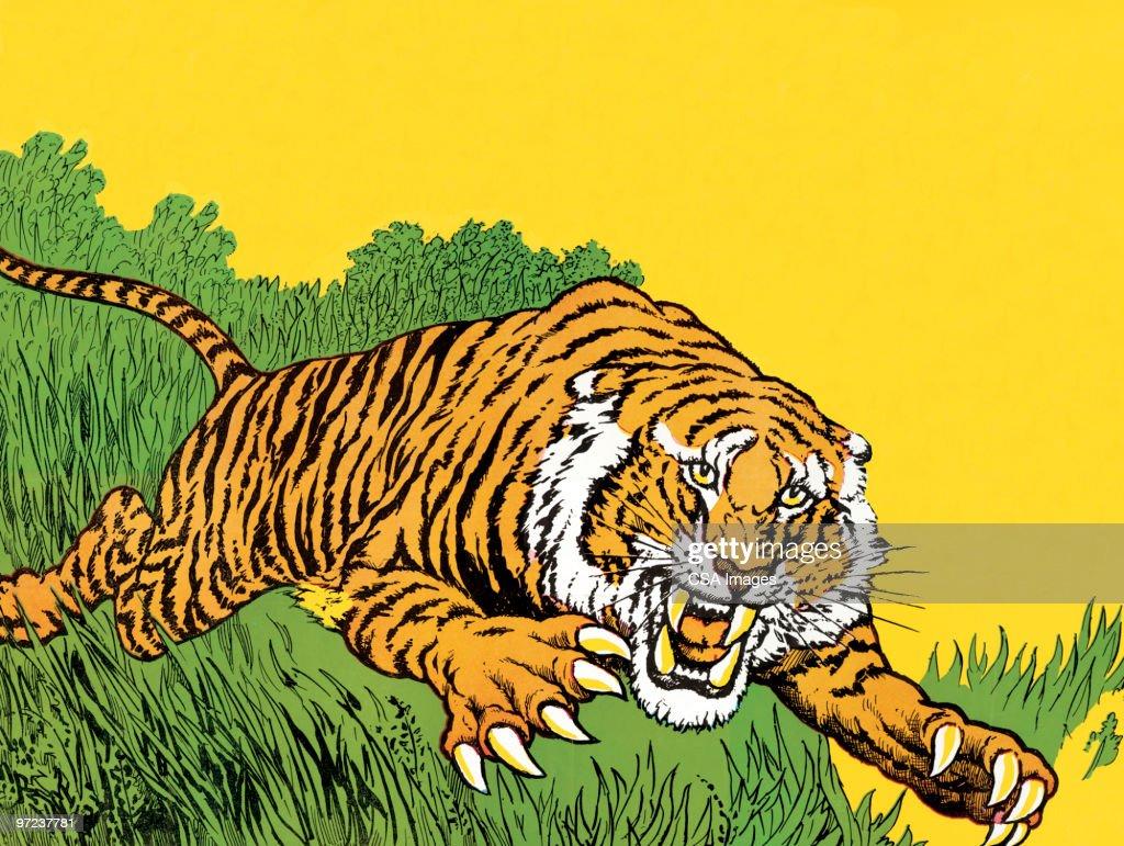 Tiger : stock illustration