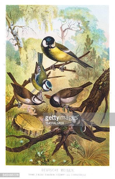 Tit chickadees illustration 1882