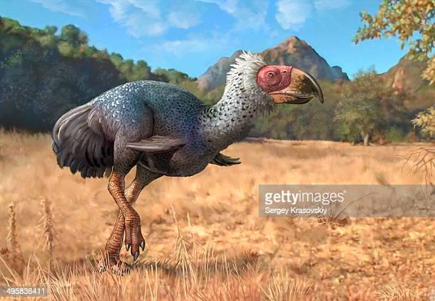 titanis walleri, a flightless carnivorous bird from the pleistocene epoch. - paleontology stock illustrations