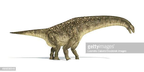 Titanosaurus dinosaur on white background with drop shadow.