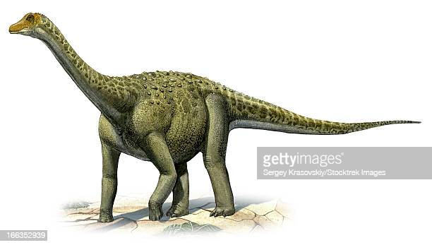 Titanosaurus indicus, a prehistoric era dinosaur from the Upper Cretaceous period.