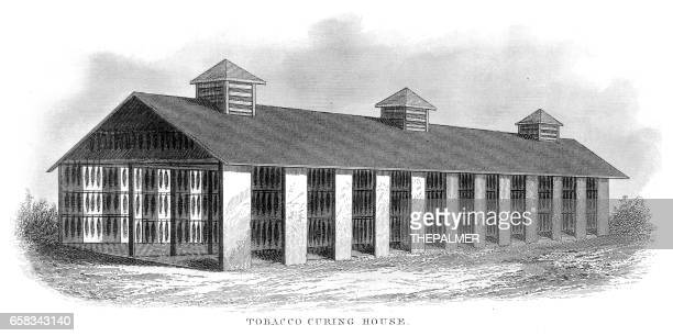tobacco curing house engraving 1873 - tobacco crop stock illustrations, clip art, cartoons, & icons