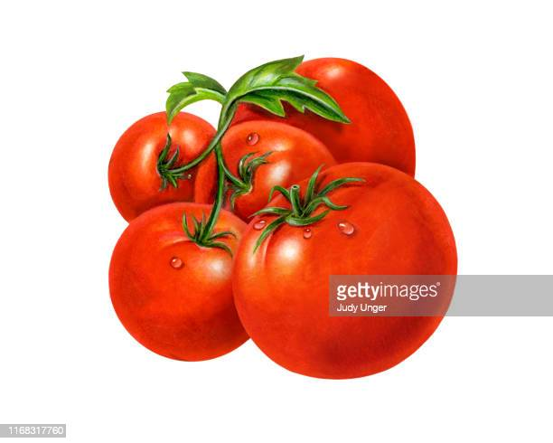 tomatoes and vine - artistic product stock illustrations