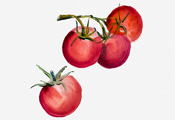 Tomatoes Watercolor Painting Wall Art