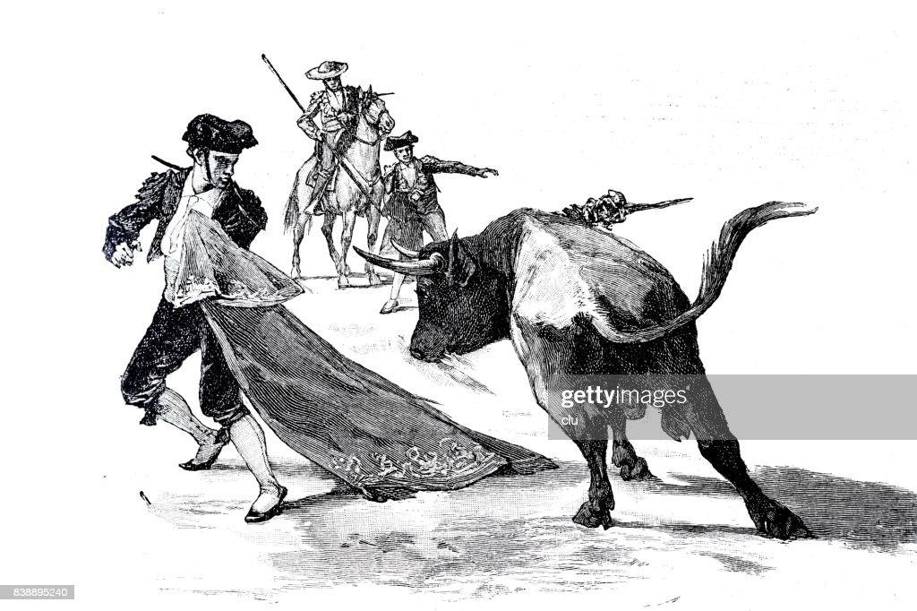 Torero fight: bull running against man holding red curtain : stock illustration