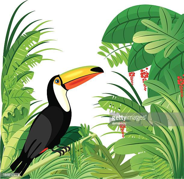 toucan and tropical rainforest - costa rica stock illustrations, clip art, cartoons, & icons