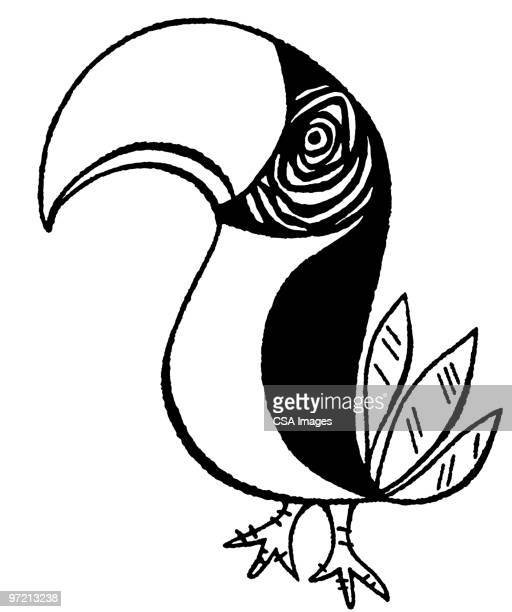 toucan - pacific islands stock illustrations