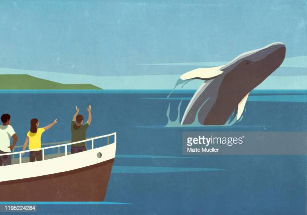tourists on boat watching breaching whale in ocean - standing stock illustrations