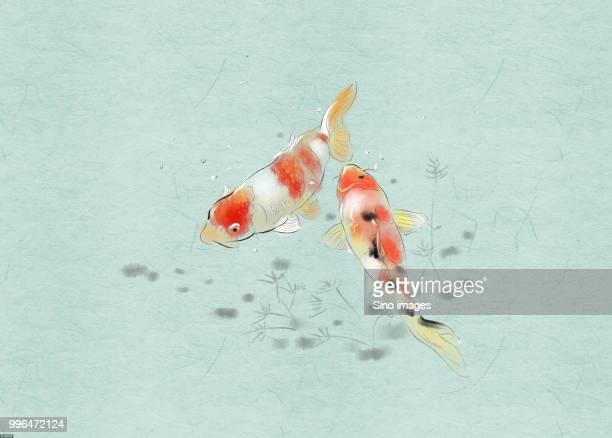 illustrations, cliparts, dessins animés et icônes de traditional chinese painting of koi carps - carpe