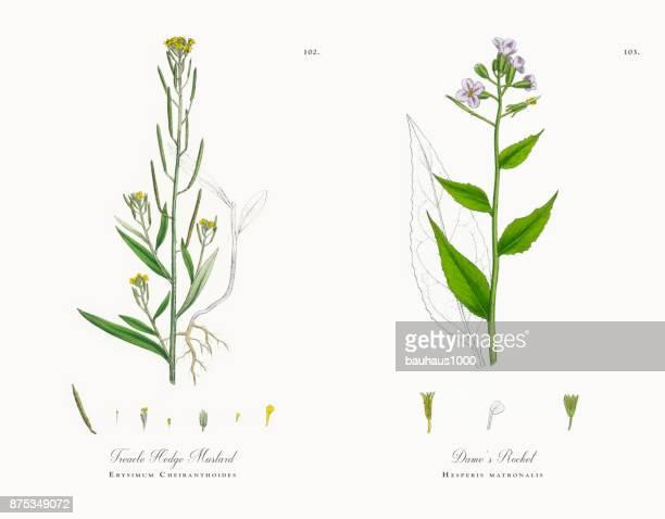 60点の植物の状態のイラスト素材クリップアート素材マンガ素材