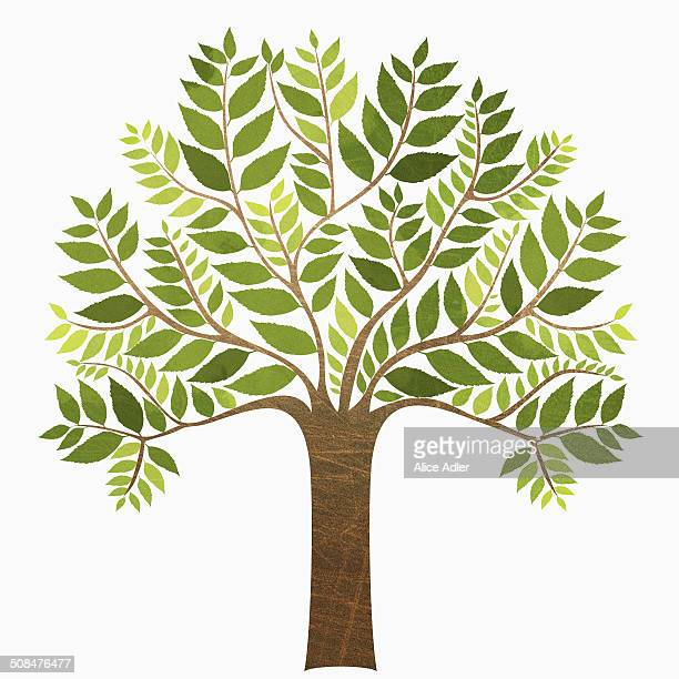 a tree against white background - growth stock illustrations