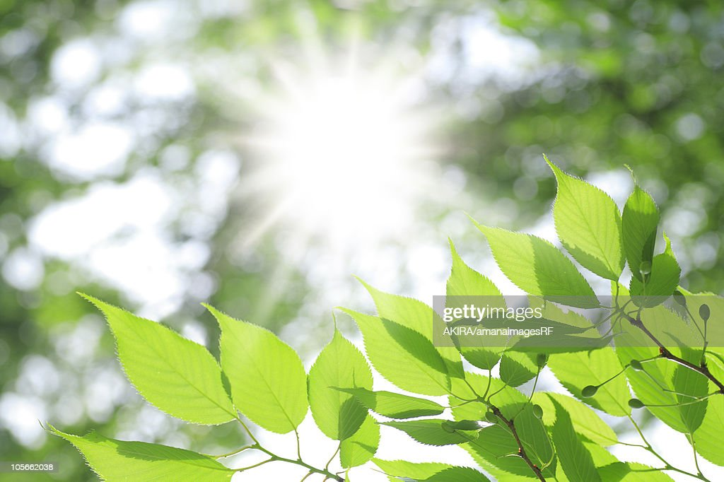Tree and sunlight : Stockillustraties